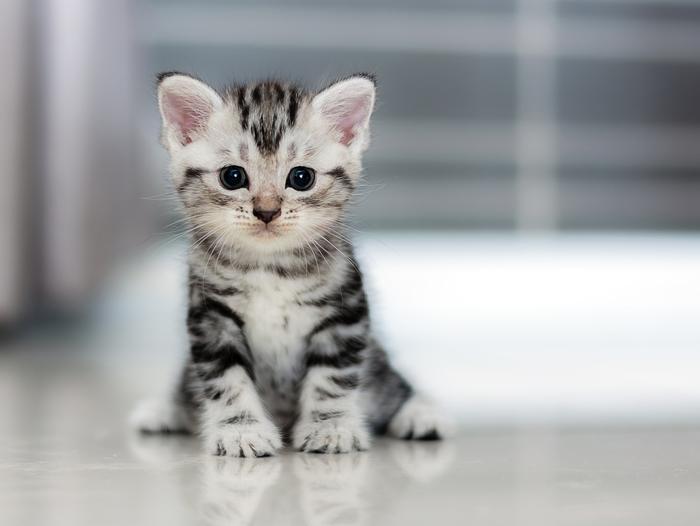 ペット】猫の飼い方:種類・寿命・値段まとめ , 子育て情報を