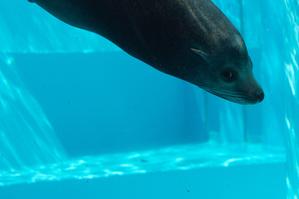 【福岡】マリンワールド海の中道:九州の海を再現した迫力満点の水族館!