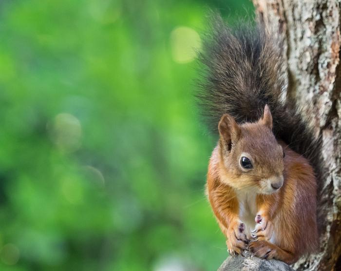 可愛い小動物ランキング|ペットで飼える人気の種 …