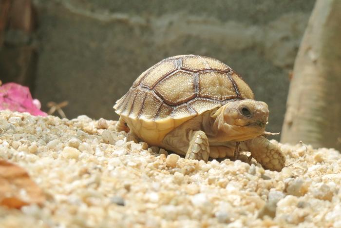 【ペット】亀の飼い方:種類・寿命・値段まとめ