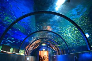 北海道のおすすめ水族館10施設!空港至近のサケの水族館も人気