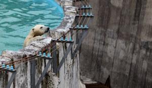 北海道のおすすめ動物園15施設!ふれあい放題の人気動物園も