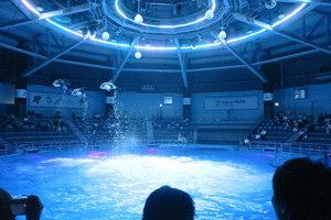 関東のおすすめ水族館19施設!デートに人気のイルカショーも
