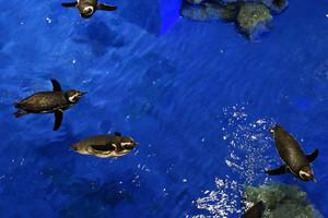 東京のおすすめ水族館12施設!夜デートに行ける人気水族館も
