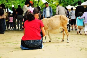 関東のおすすめ動物園20施設!子どもに人気のふれあい動物園も