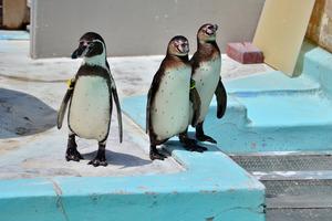 神奈川のおすすめ水族館・動物園13施設!無料の動物園も人気