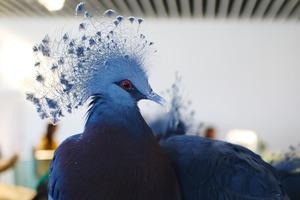 関西のおすすめ動物園20施設!無料動物園あり
