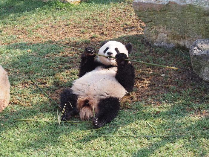 和歌山のおすすめ水族館・動物園10施設!パンダに会いに行こう