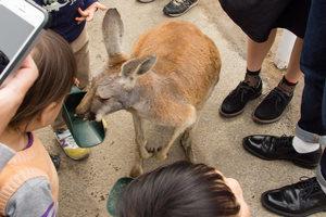 兵庫のおすすめ水族館・動物園15施設!人気のふれあい動物園も
