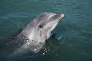 四国のおすすめ水族館・動物園19施設!イルカにもふれあえる