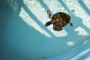九州のおすすめ水族館15施設!デートや家族旅行にも人気