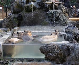 埼玉県こども動物自然公園:動物たちと触れ合える自然公園