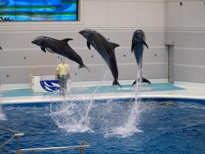 鹿児島のおすすめ水族館・動物園6施設!イルカショーも人気