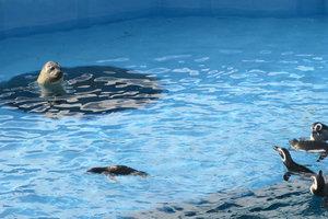 横浜のおすすめ水族館・動物園8施設!デートや子連れにも人気