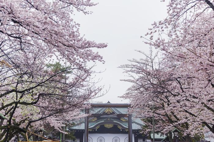 【2019年版】関東のおすすめ花見スポット・名所まとめ:さくらの開花予想も紹介!
