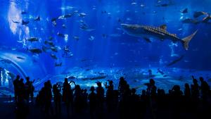 沖縄のおすすめ水族館・動物園4施設!美ら海&ふれあい動物園も