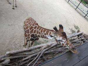 広島のおすすめ水族館・動物園5施設!広島市内&宮島が人気