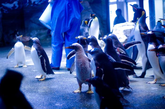 長崎のおすすめ水族館・動物園7施設!イルカ&ペンギンに会える