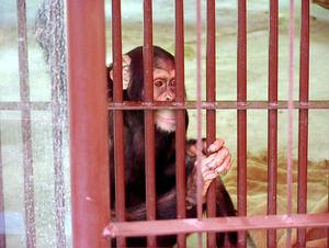 岡山のおすすめ水族館・動物園5施設!人気のふれあい動物園も