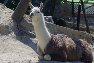 香川のおすすめ水族館・動物園4施設!人気のふれあい動物園も