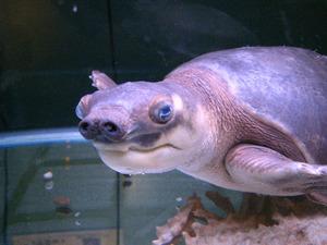 熊本のおすすめ水族館・動物園6施設!人気のふれあい動物園も