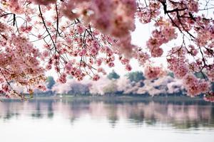 福岡で行きたいおすすめの花見スポット・名所21選