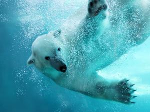 旭山動物園といえばこれ!人気ランキング上位のお土産15選