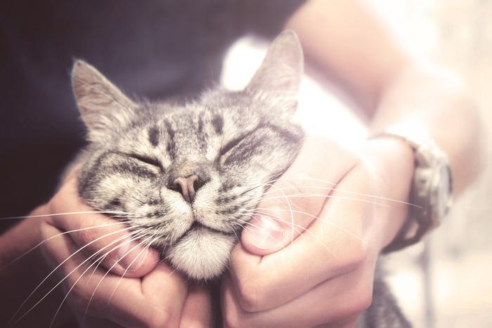 愛知のおすすめ猫カフェ11選:たくさんの猫ちゃんに癒やされよう