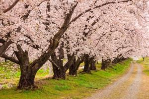広島のおすすめ花見スポット・名所20選