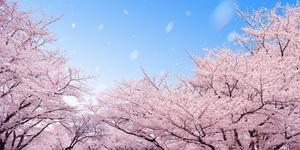 新潟のおすすめ花見スポット・名所15選