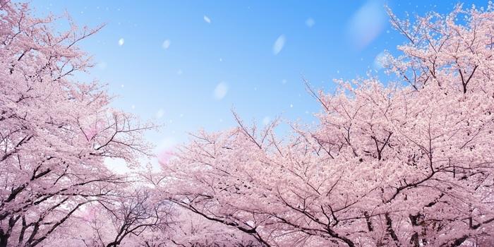 【2019年版】新潟のおすすめ花見スポット・名所15選:開花予想日もチェック!