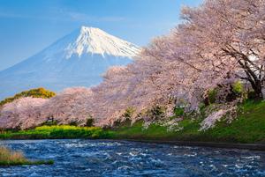 静岡のおすすめ花見スポット・名所30選