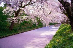 宇都宮で行きたいおすすめ花見スポット・名所6選