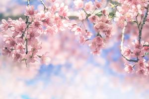 愛知のおすすめ花見スポット・名所24選
