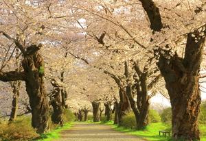 茨城のおすすめ花見スポット・名所23選