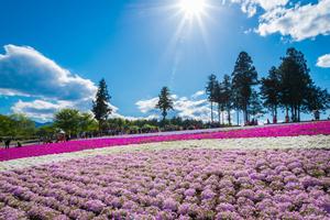 秩父のおすすめ観光スポット30選:季節の花や歴史的建物を楽しめる!