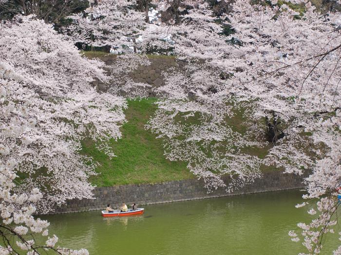 東京花見スポット完全ガイド2018! 都内で満開の桜を楽しもう