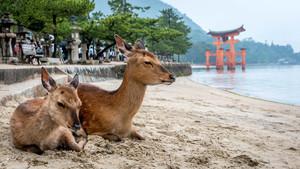 【広島】宮島のおすすめグルメ・レストランまとめ:ランチやディナーで使えるお店をご紹介