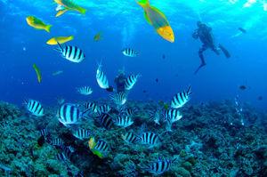 沖縄の海を満喫するなら!人気の体験ダイビングツアー15選