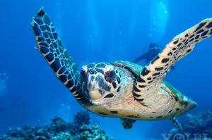最高の思い出を!沖縄・ウミガメに会いに行くツアー4選