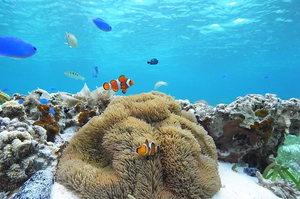 【沖縄】コバルトブルーすぎる慶良間諸島のダイビング15選!本物の自然を目に焼き付けよう!