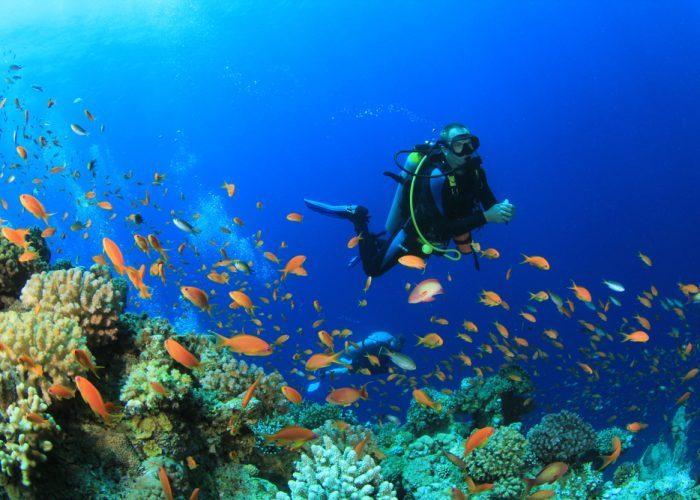 【セブ島】セブ島ダイビングの魅力に迫る!おすすめのセブ島ダイビングスポットまとめ