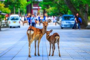 奈良で子連れにおすすめのホテル10選!ファミリーに人気の宿