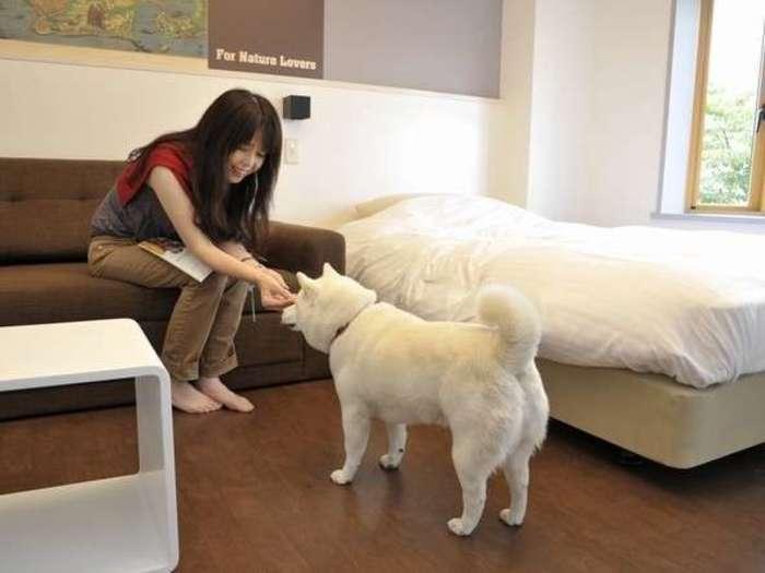ペットといっしょに北海道旅行(じゃらん編):おすすめホテル・旅館ランキング15選