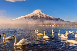 【山梨】山中湖村周辺のラグジュアリーに滞在できる高級ホテル&旅館!記念日利用にもおすすめ