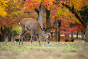 奈良で子供連れで泊まりたい旅館12選!子連れの家族旅行におすすめ