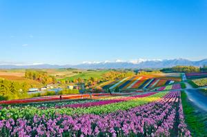 【北海道】美瑛駅周辺のラグジュアリーに滞在できる高級ホテル&旅館5選!記念日利用にもおすすめ