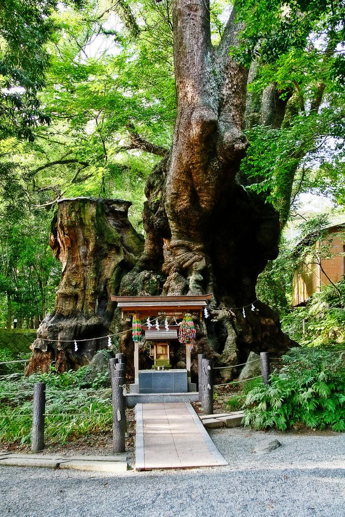 熱海・来宮神社をめぐる旅♡旅好き女子必見の樹齢2000年の大楠