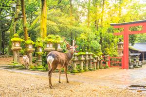 奈良のパワースポット神社 おすすめ13選