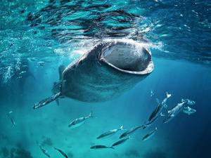 【大阪】ジンベイザメに会いに海遊館へ!お得な料金で入場するには?